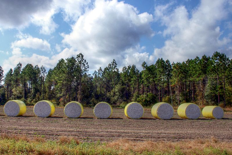 Cotton bales in a row by muffinn, licensed under CC BY 2.0