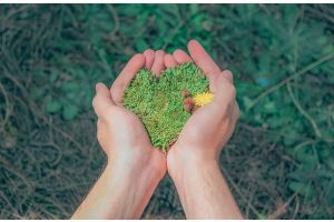 Hands holding green earth shaped like a heart