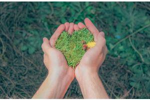 Hands holding green earth shaped like a heart