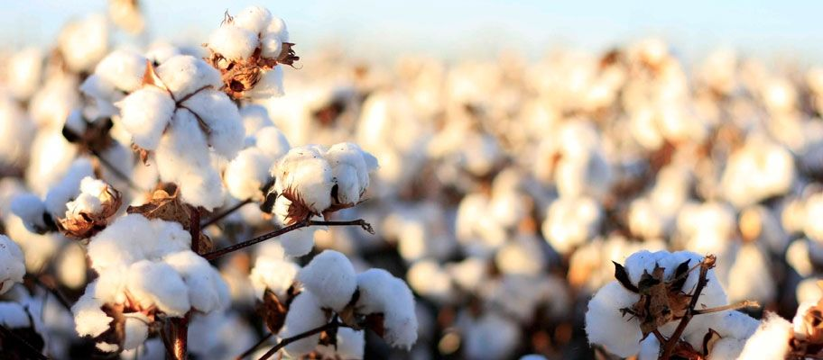Textile Fact or Fiction? Egyptian Cotton Explained