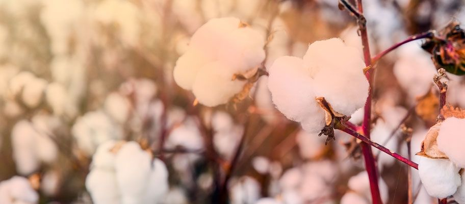 Overcoming Cotton Confusion: A Breakdown of Different Types of Cotton